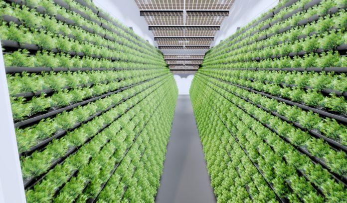 Indoor-Farming, MABEWO AG
