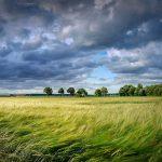 Finanzielle Auswirkungen des Umweltschutzes / Pixabay