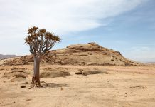 Natural beauties of Africa - Drought and lack of drinking water