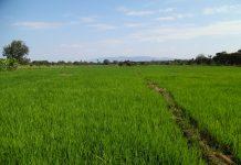Landwirtschaft: Grundlage der ruandischen Wirtschaft