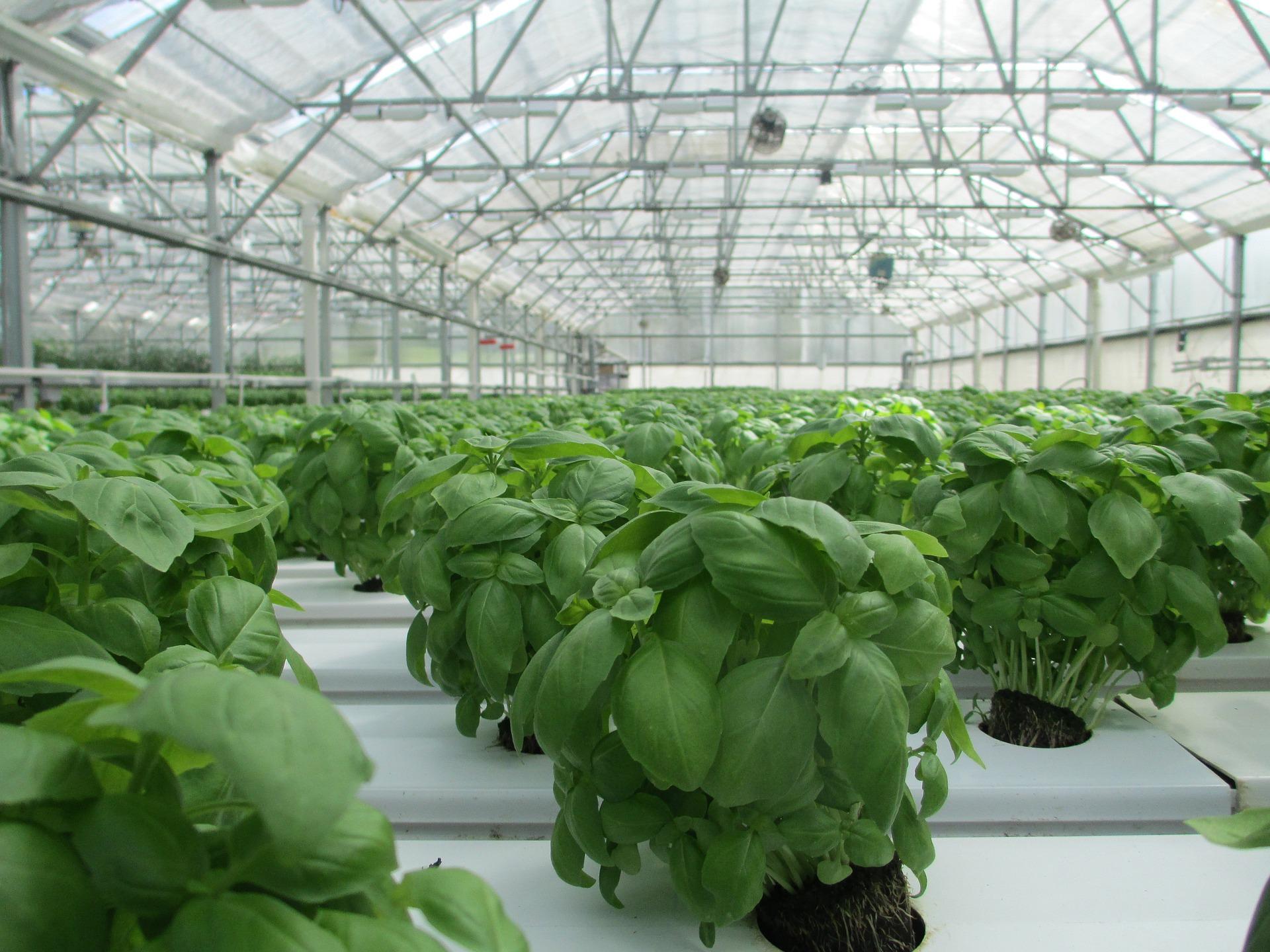 Klimawandel und Energiewende - Ressourcenschonung mit Indoor-Farming