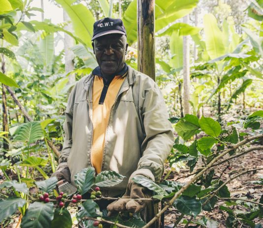 Agriculture: the basis of the Rwandan economy
